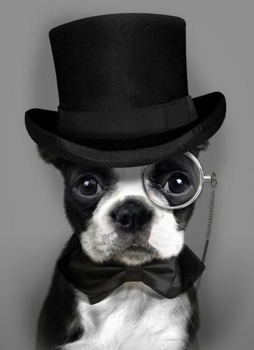woof like a sir