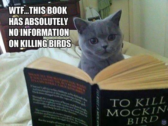 cat-reading030817